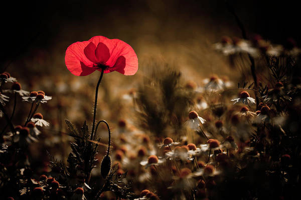 Red Flower Photograph - A Bit Of Warmth by Fabien Bravin