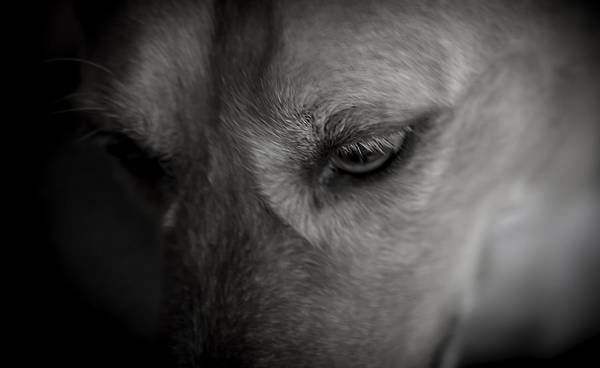Photograph - A Black And White Moment With My Dog by Jim DeLillo