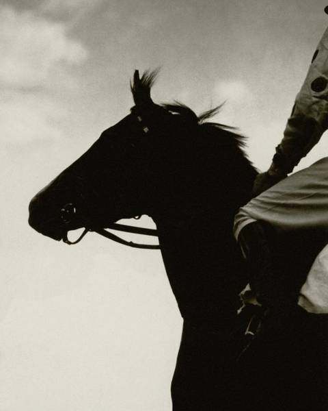 Sports Photograph - A Black Racehorse by Edward Steichen