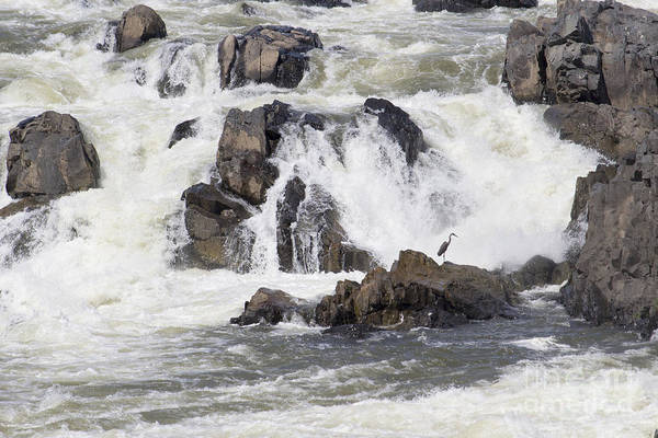 Photograph - A Blue Heron Waits Hopefully At Great Falls On The Potomac. by William Kuta