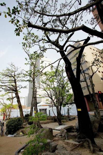 Nuclear Bomb Wall Art - Photograph - A-bombed Trees Of Hiroshima by Andy Crump/science Photo Library
