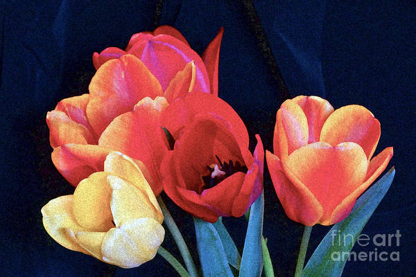 Photograph - A Bright Warmth Of Tulips by Byron Varvarigos