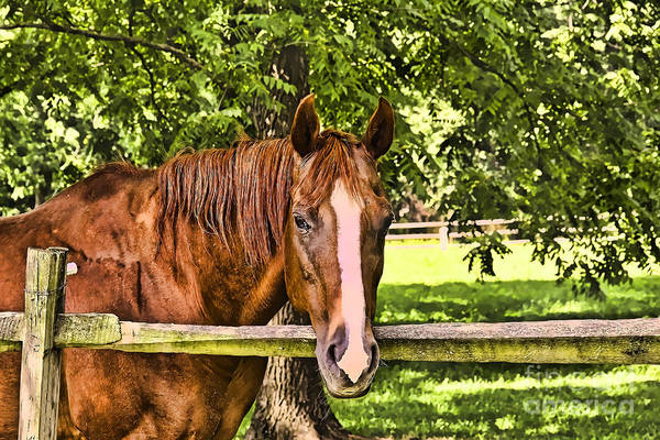 Photograph - A Brown Horse by Jim Lepard