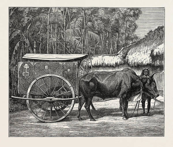 Vietnam Drawing - A Bullock Carriage In Cochin-china by Chinese School