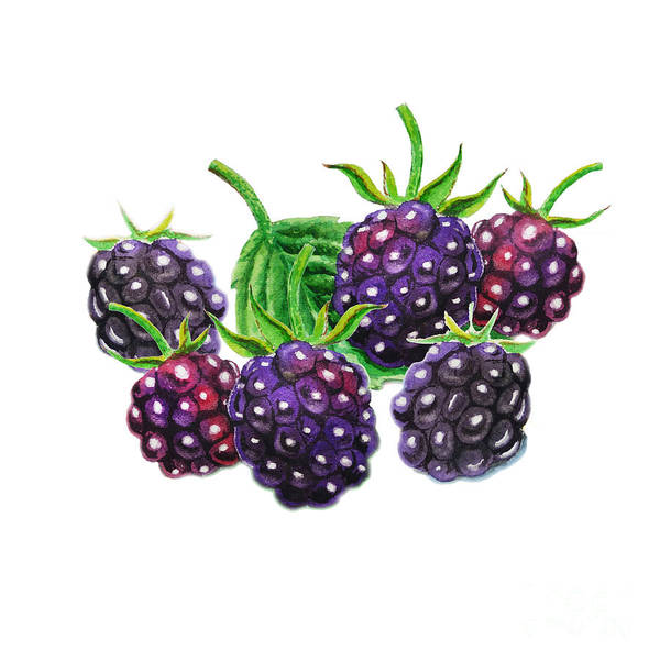 Bunch Painting - A Bunch Of Blackberries by Irina Sztukowski