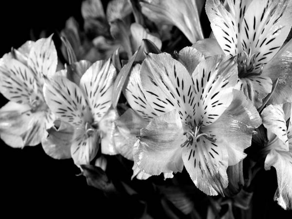 Photograph - A Bunch Of Flowers From Trader Joe's by Digital Photographic Arts