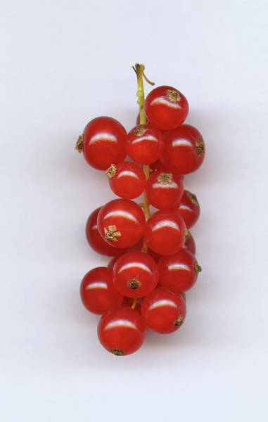 Currants Photograph - A Bunch Of Red Currants, Close-up by Larry Washburn