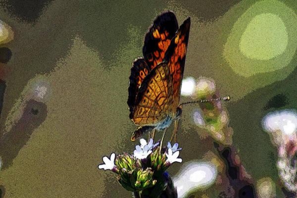Photograph - A Butterflies View  by Kim Pate