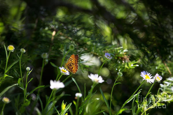 Photograph - A Butterfly's World by Belinda Greb