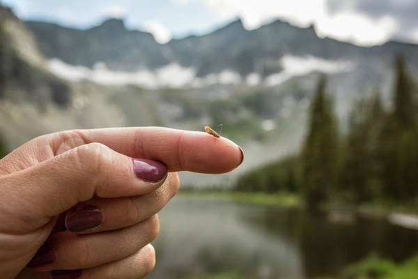 Urban Wildlife Photograph - A Caddis On A Womans Finger, Montana by Jess McGlothlin Media