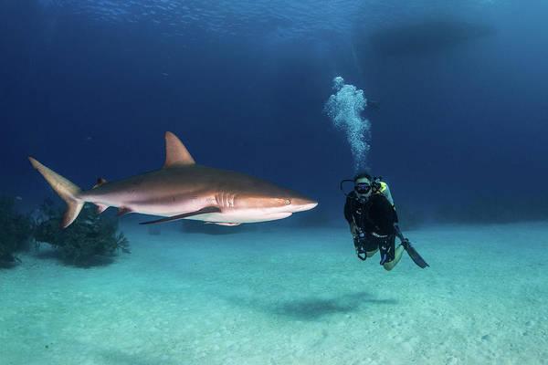 Wall Art - Photograph - A Caribbean Reef Shark Checks by Brook Peterson
