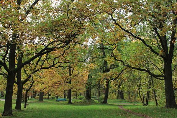 Sestroretsk Photograph - Forest Green Carpet by Christine Rivers