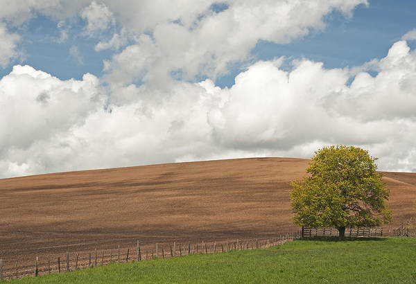Wall Art - Photograph - A Casual Summer by Latah Trail Foundation