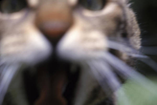 Tigger Wall Art - Photograph - A Cat Attempts To Attack The Cameraman by Lars Howlett