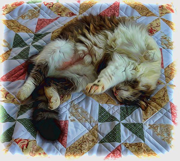 Mixed Media - A Cats Life by Pamela Walton