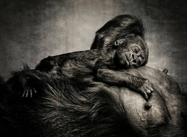 Mother Photograph - A Child Was Born by Antje Wenner-braun