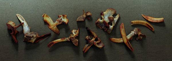 Meat Photograph - A Cluster Of Sheep Bones by Romulo Yanes
