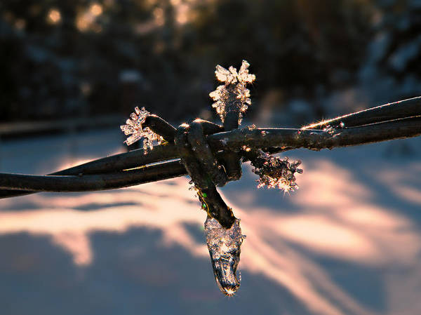 Photograph - A Cold Welcome by Micki Findlay