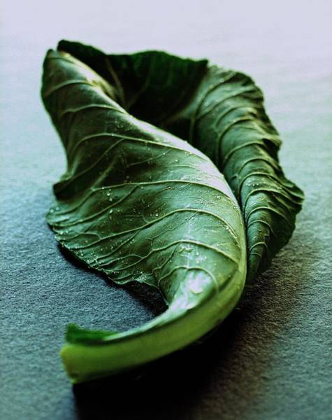 Food Photograph - A Collard Leaf by Romulo Yanes