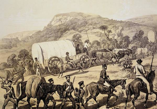 Cart Drawing - A Convoy Of Wagons by English School
