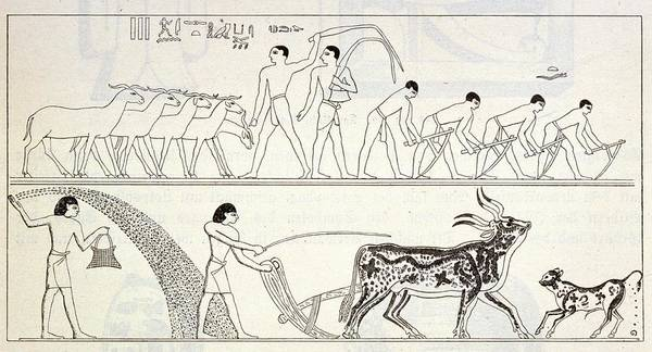 Wall Art - Drawing - A Copy Of Egyptian Wall  Paintings by Mary Evans Picture Library
