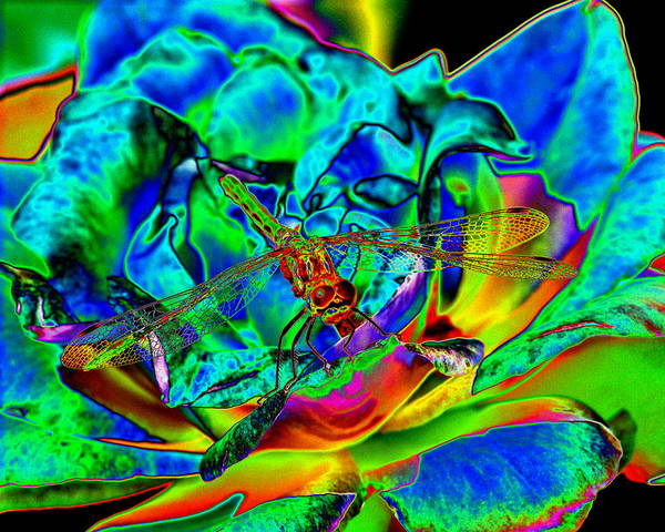 Photograph - A Cosmic Dragonfly On A Psychedelic Rose by Ben Upham III