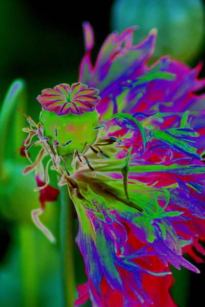 Photograph - A Cosmic Papaver Somniferum by Ben Upham III