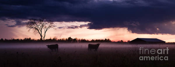 Photograph - A Couple Of Cows by Lori Dobbs