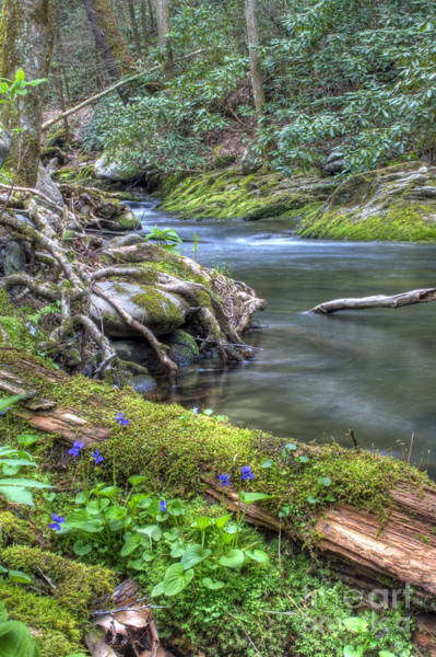 Photograph - A Creek Side Hike by Photography by Laura Lee