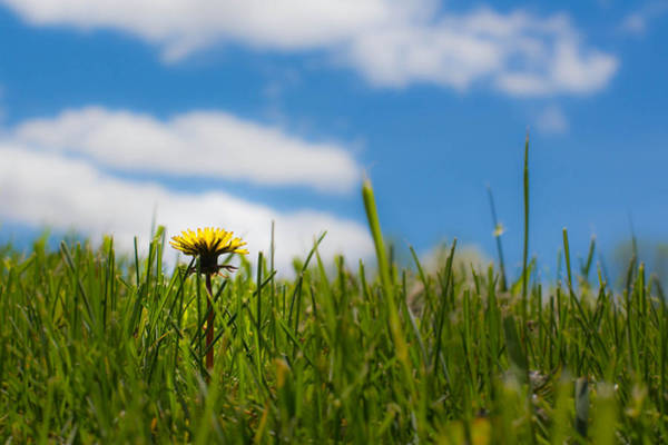Christy Photograph - A Dandelion's View by Christy Patino