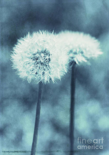 Photograph - A Dandy In Blue by Pam  Holdsworth