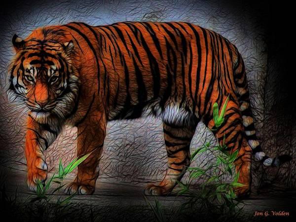 Photograph - A Dangerous Tiger by Jon Volden