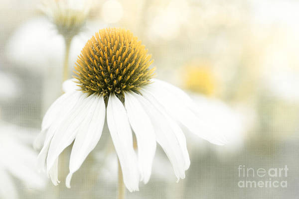 Photograph - A Day To Dream by Beve Brown-Clark Photography