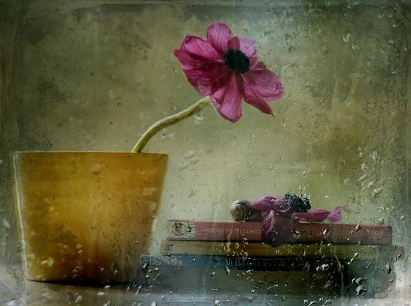 Rainy Photograph - A Day To Stay At Home by Delphine Devos