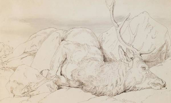 Antlers Drawing - A Dead Stag by Sir Edwin Landseer