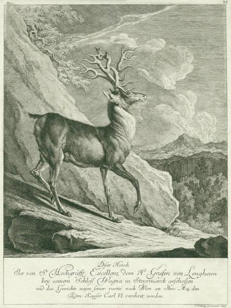 Hoof Drawing - A Deer, Johann Elias Ridinger by Johann Elias Ridinger