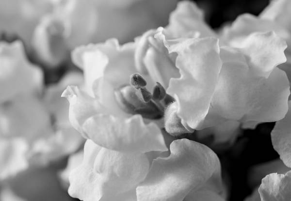 Photograph - A Delicate Nature by Fran Riley