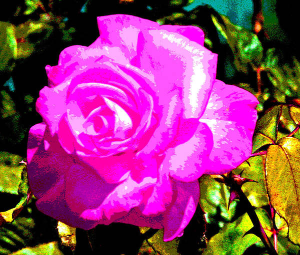 Photograph - A Delta Rose by Joseph Coulombe
