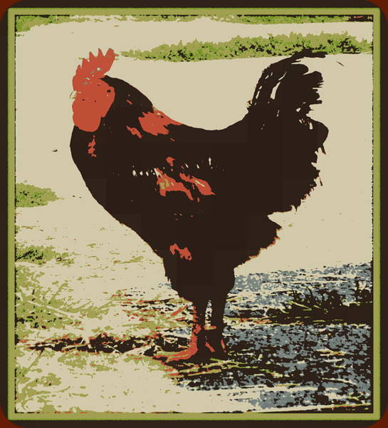 Posterize Photograph - A Different Chicken by Kathy Barney