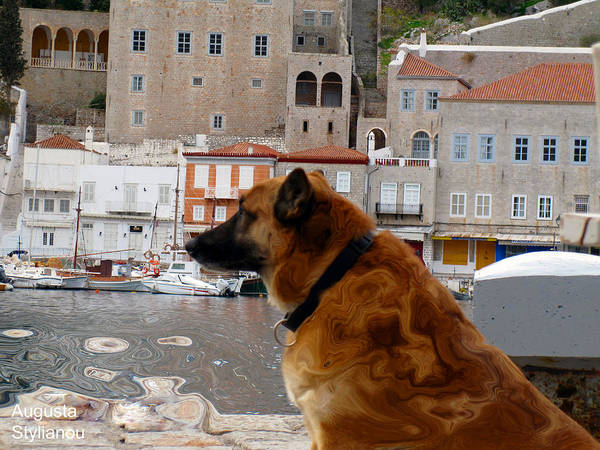 Photograph - A Different Dog by Augusta Stylianou