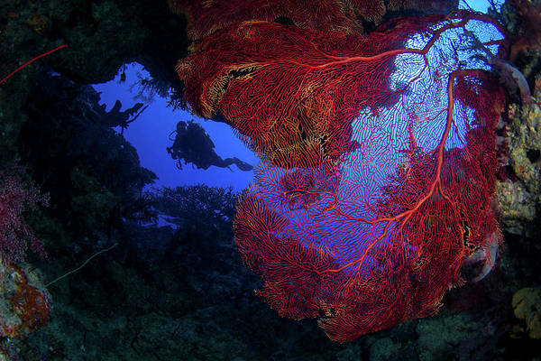 Wall Art - Photograph - A Diver Enters A Cave Full Of Sea Fans by Brook Peterson