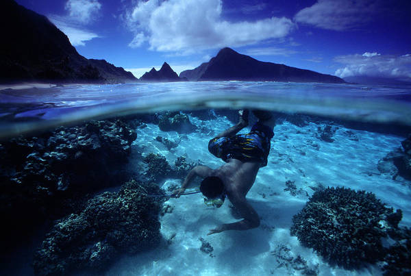 Wall Art - Photograph - A Diver Searches For Tasty Seafood by Randy Olson