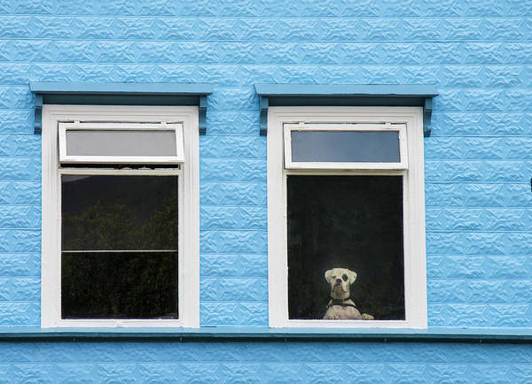 Wall Art - Photograph - A Dog Looking Through A Hotel Window by Michael Melford