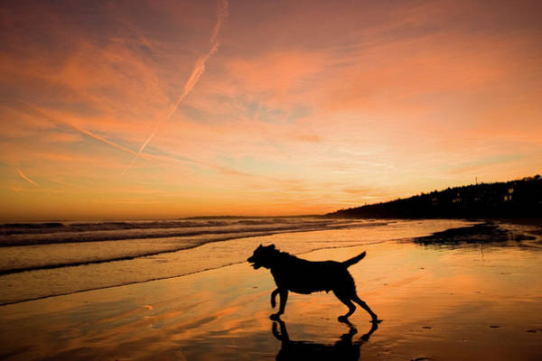 Scarborough Photograph - A Dog On The Beach At Sunset by Carl D. Walsh