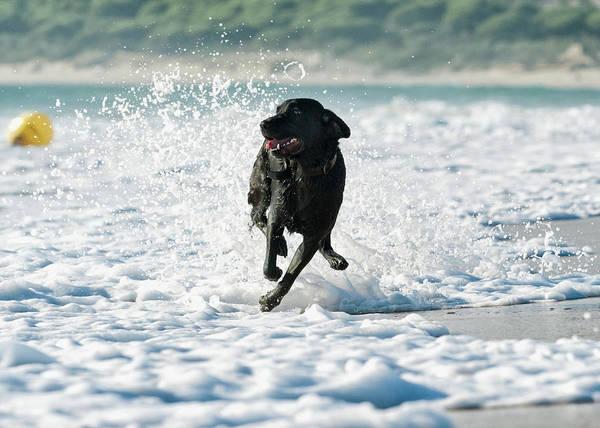 A Dog Running In The Tide Along A Beach Art Print