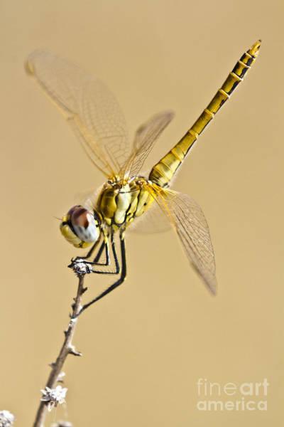 Photograph - A Dragon Flies by Heiko Koehrer-Wagner