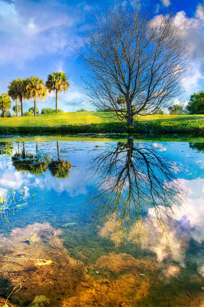 Okeeheelee Park Photograph - A Dreamy Day by Debra and Dave Vanderlaan