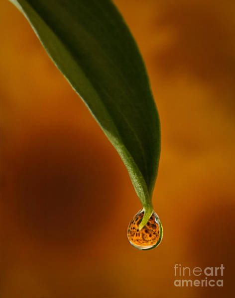 Photograph - A Drop Of Sunshine by Susan Candelario