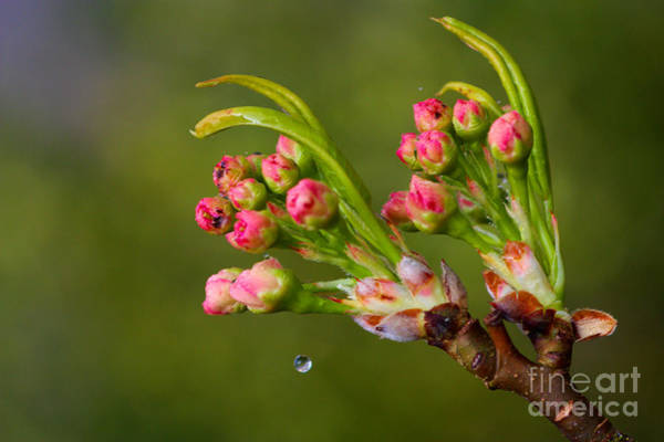 Photograph - A Drop Of Water by Jeremy Hayden