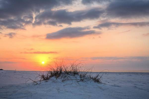 Photograph - A Dune Is Born by JC Findley